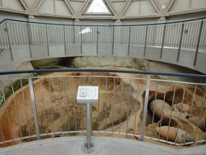 墳丘墓保存施設